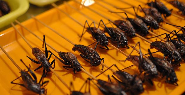 7 choses etranges et controversees a faire en Asie du Sud Est - Manger des insectes en Asie