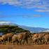 Visiter la Tanzanie - Kilimandjaro