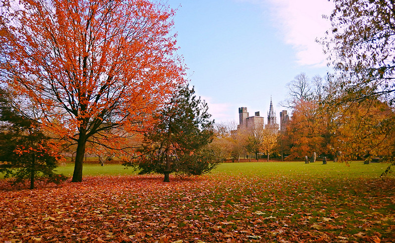 Autumn in Bute Park